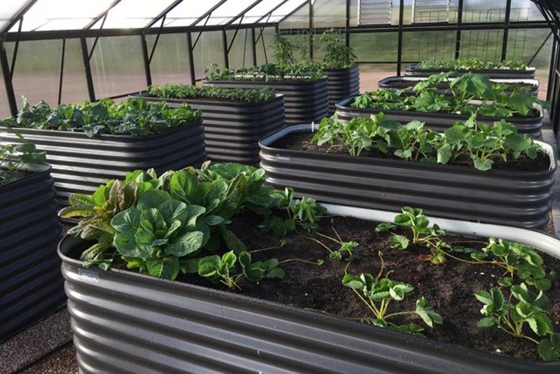 Slim Garden Beds1